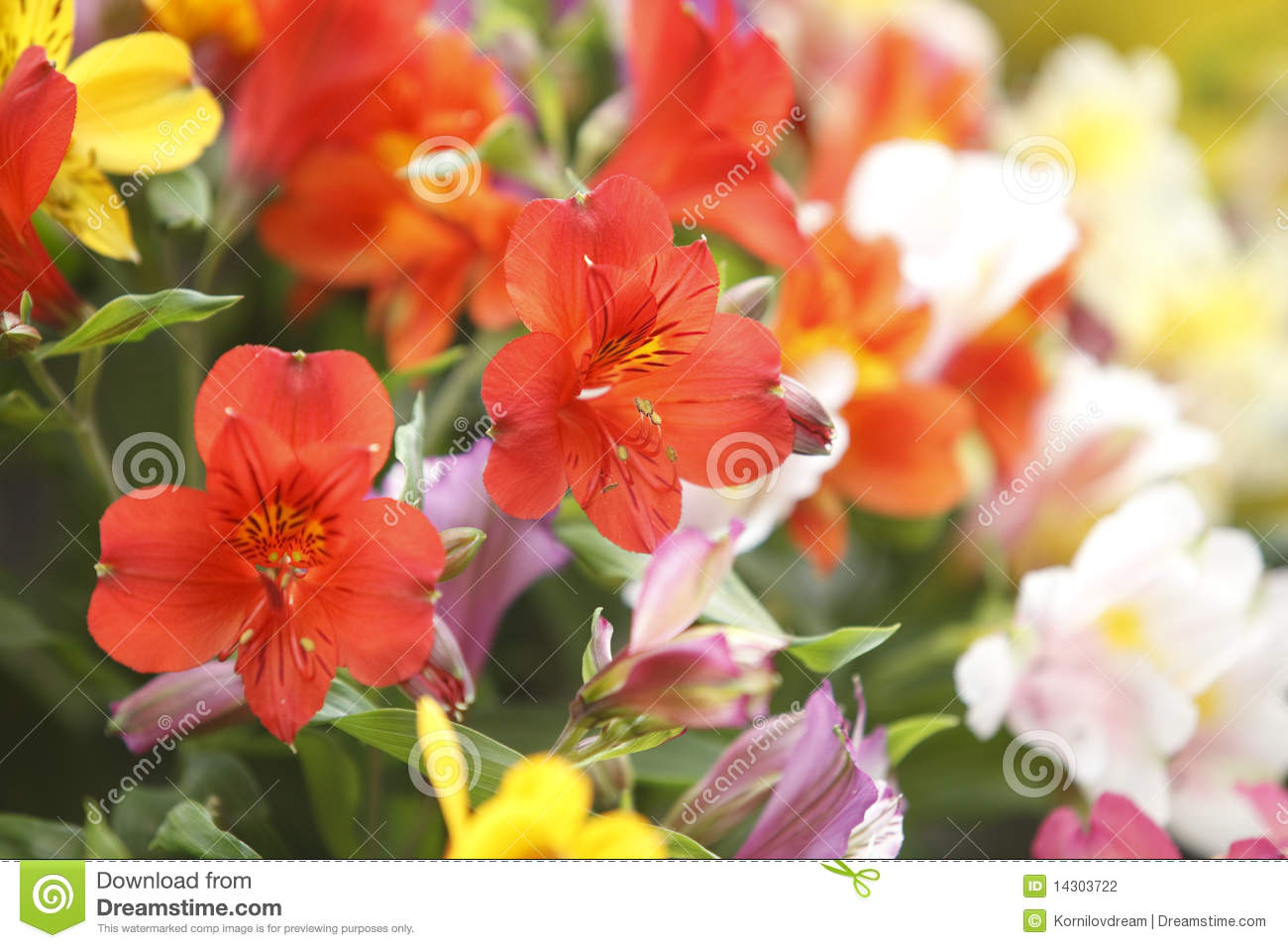 Flowers bouquet stock photography image 14303722 for A lot of different flowers make a bouquet