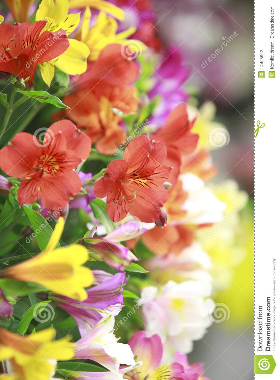 Flowers bouquet stock photography image 14405902 for A lot of different flowers make a bouquet