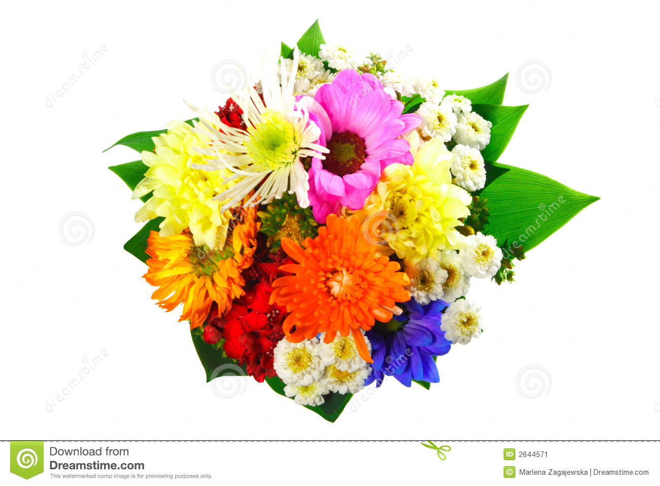 Flowers Bouquet Stock Image Image Of Aroma Give Holding 2644571