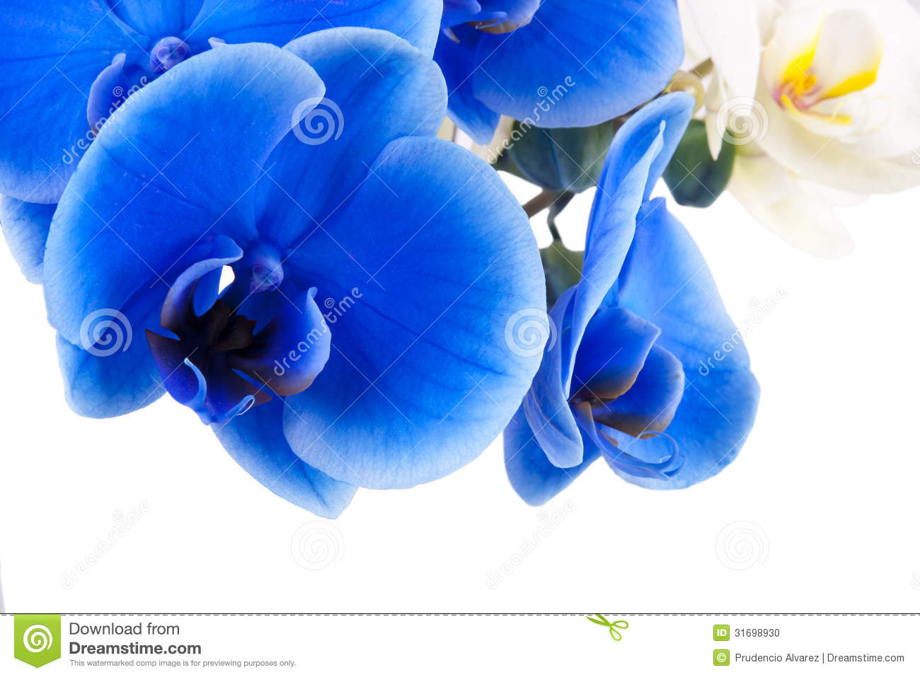 Blue orchid business plan