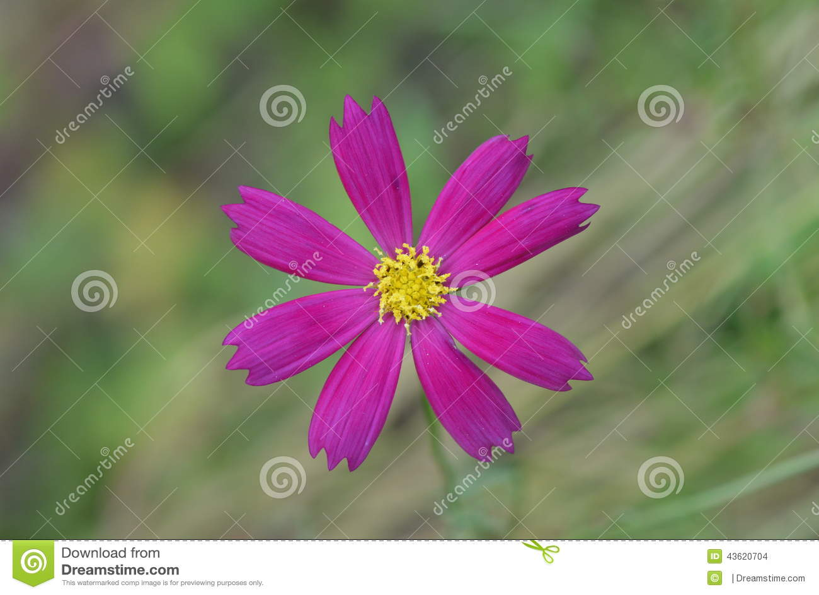 All season outdoor plants-7811