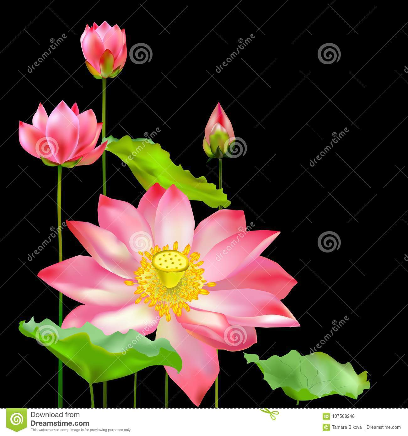 Flowers Buds And Leaves Of The Lotus Stock Illustration