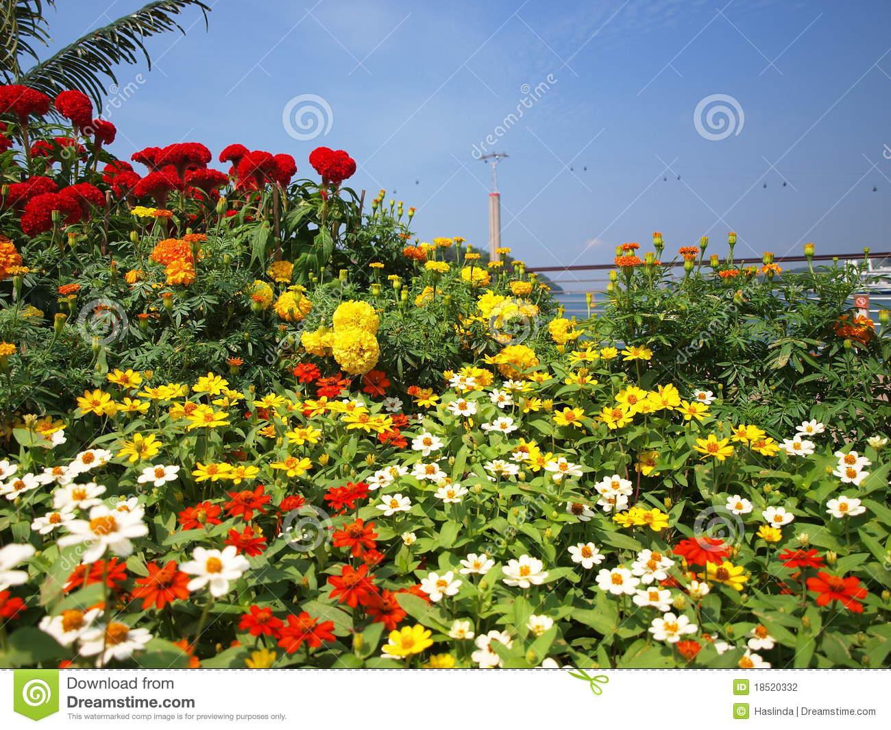 Flowers and cable car