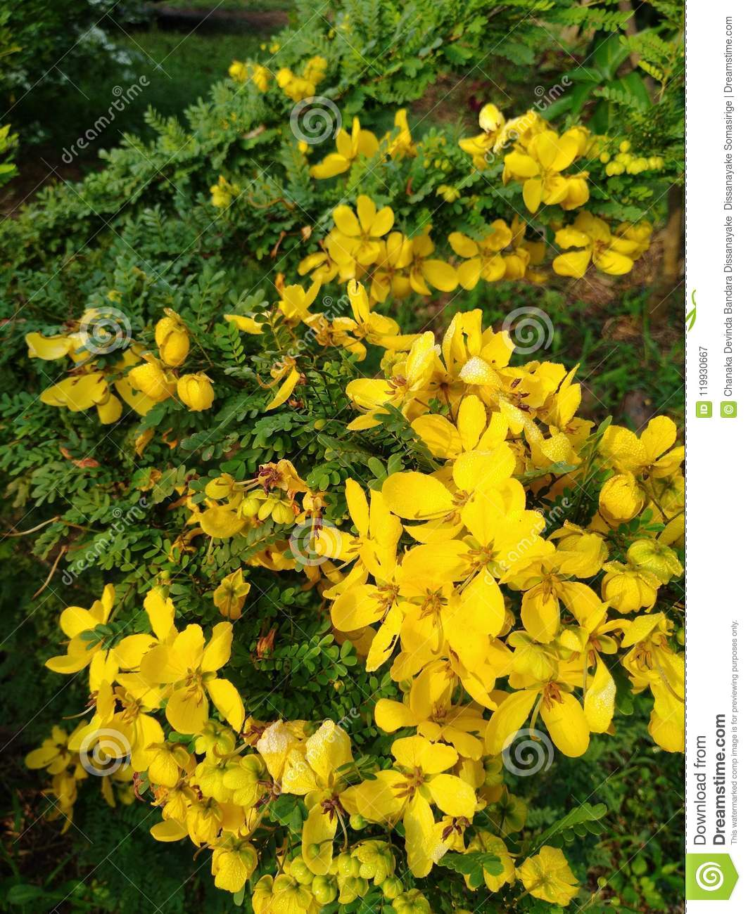 Yellow Colour Marvellous Beautiful Flowers Stock Image Image Of