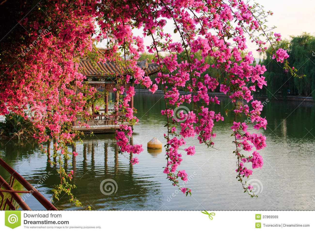 flowers in chinese park. royalty free stock images  image, Beautiful flower