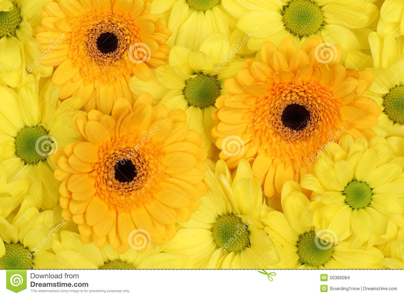 Spring day flowers choice image flower decoration ideas spring day flowers gallery flower decoration ideas spring day flowers images flower decoration ideas spring day mightylinksfo