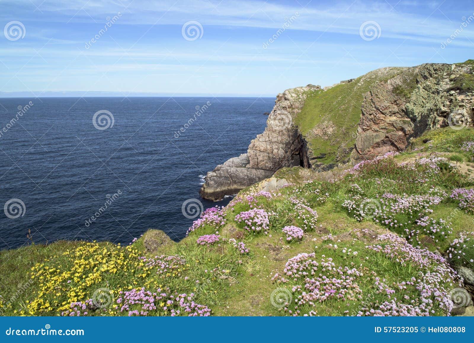 Flowers On Cliffs In Ireland Stock Image Image Of Irish Plants