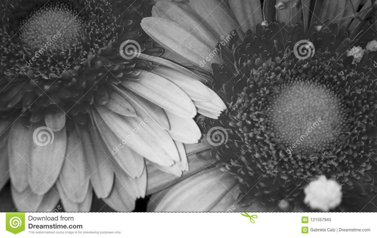 Flowers Stock Illustration Illustration Of Gift Closeup 121557945
