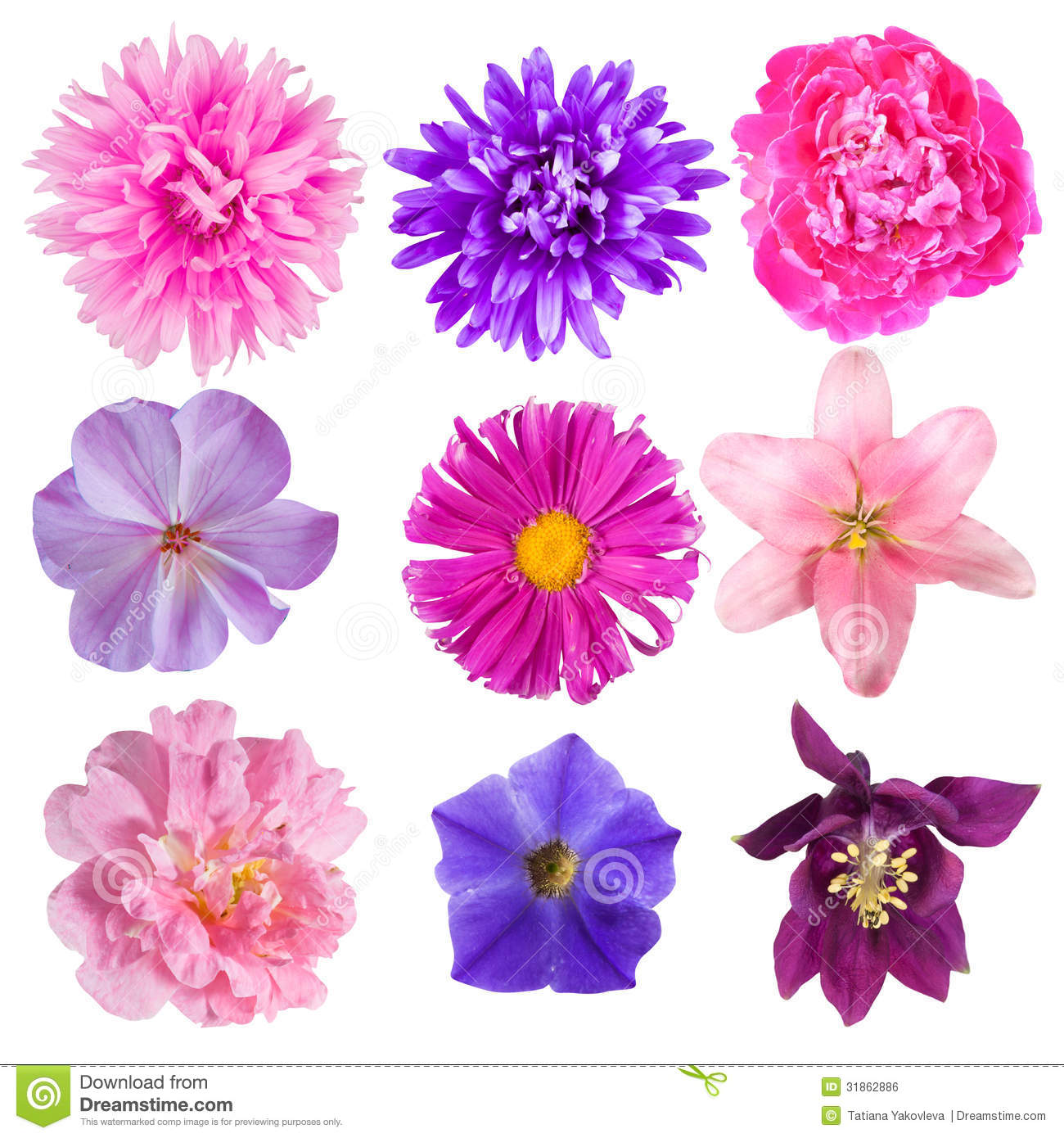 Flowers royalty free stock image image 31862886 for What makes flowers different colors