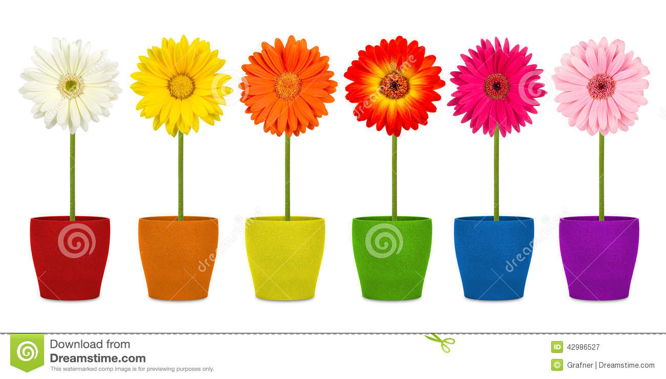 Flowers In Coloful Pots Stock Image Image Of Summer