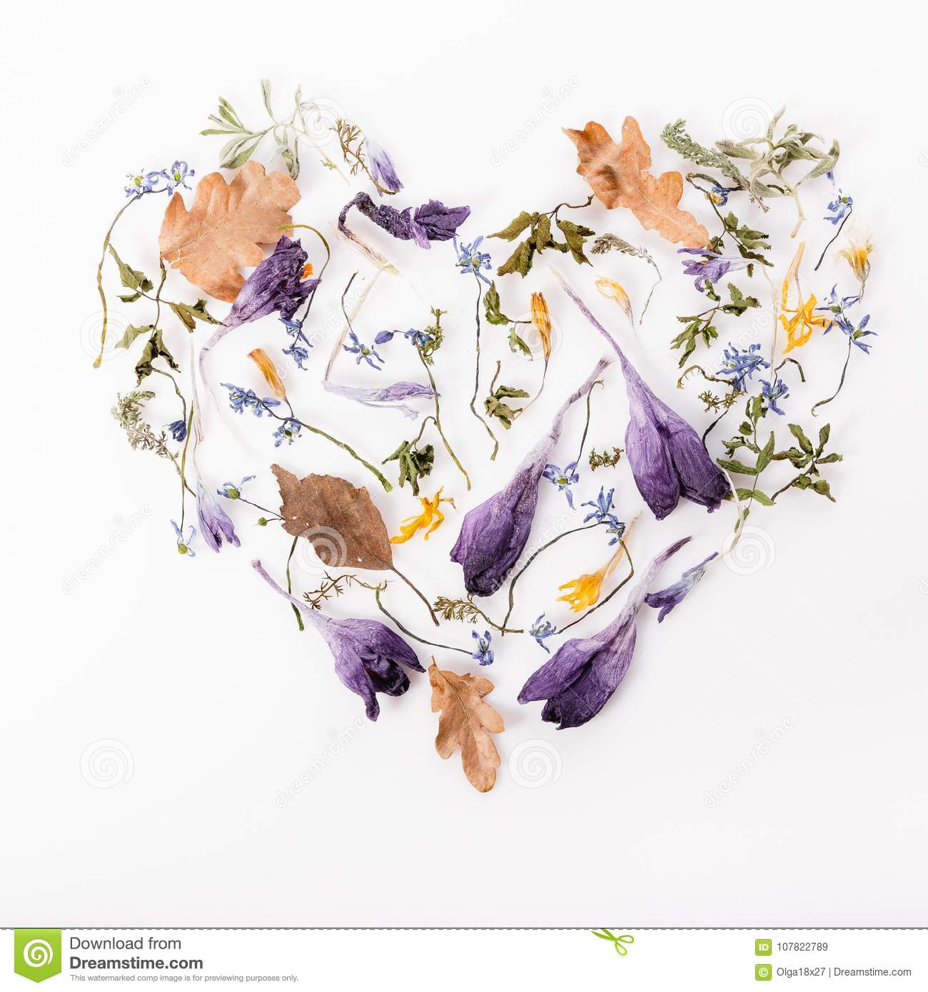 Flowers Composition Frame Made Of Dried Flowers On White Background Flat Lay Top View Stock Image Image Of Background Copyspace 107822789