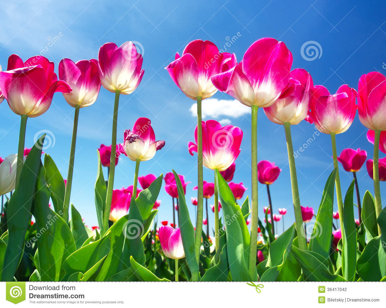 Flowers Concept Stock Photo Image Of Beauty Decoration