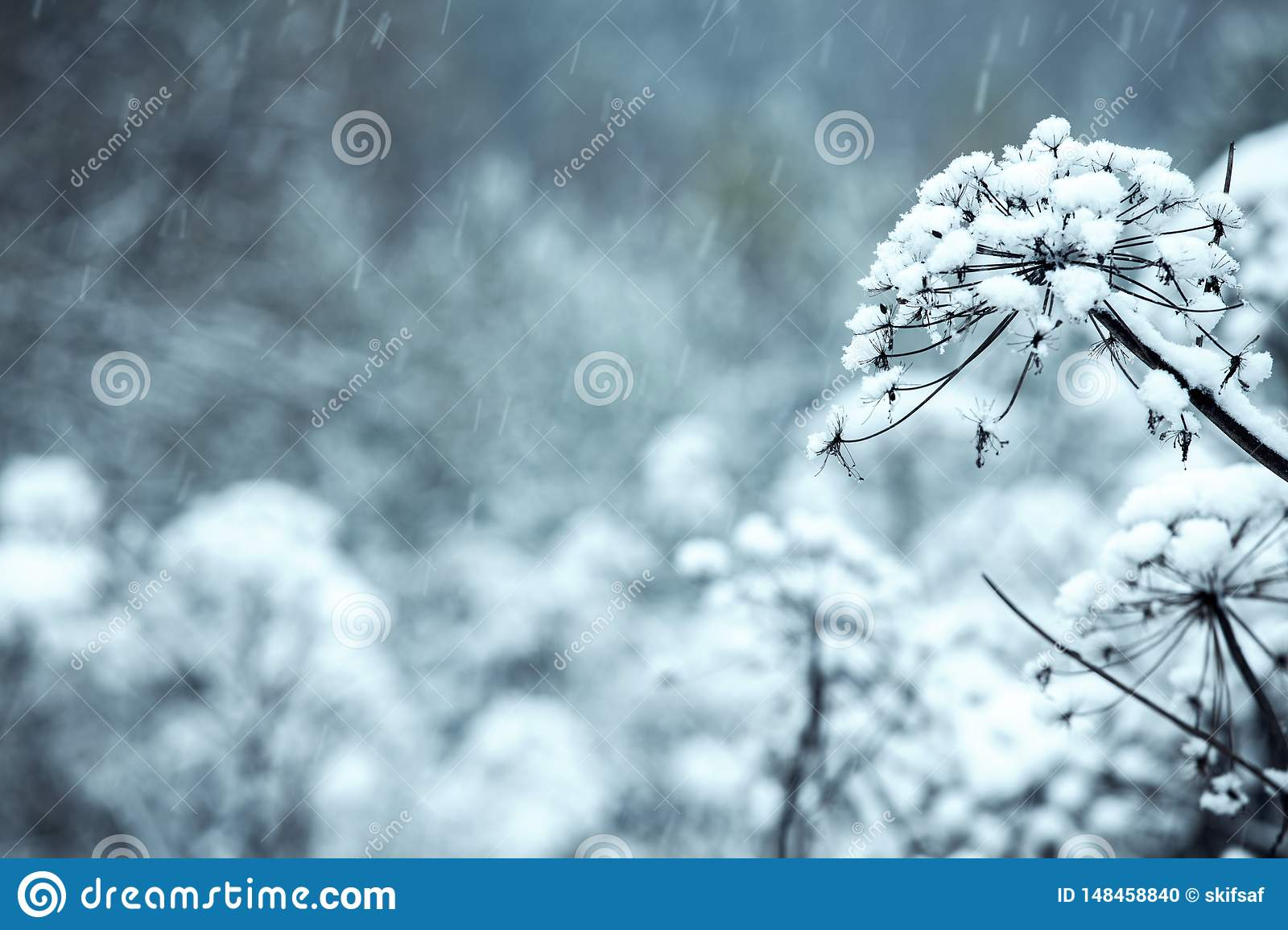 The flowers are covered with ice, snow