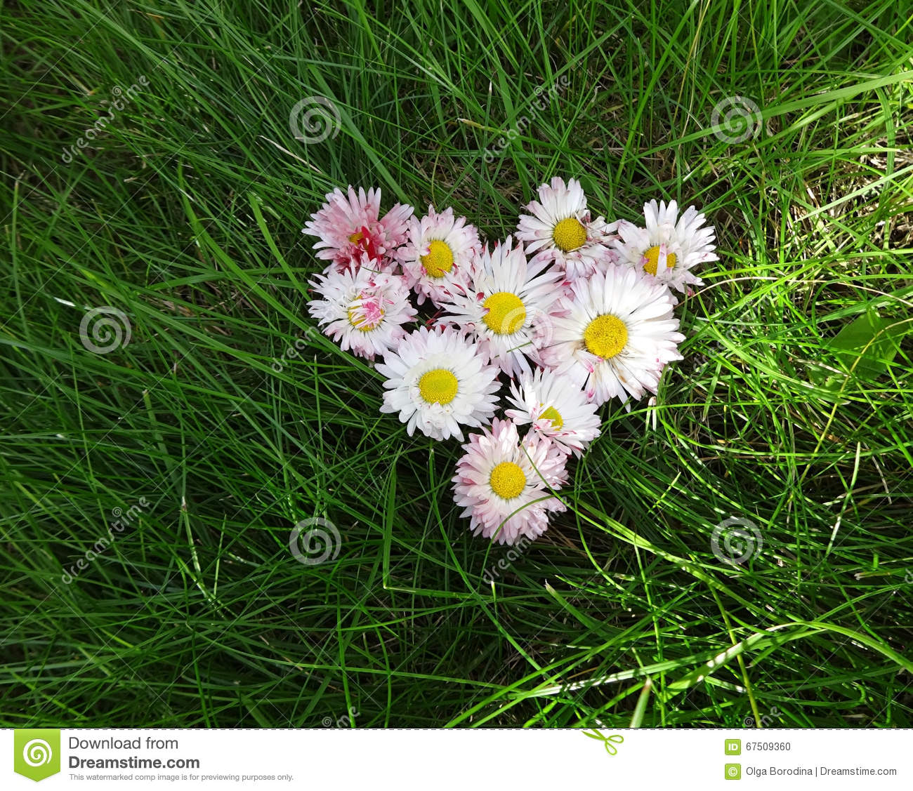 Flowers daisies in a heart shape stock photo image of love flowers daisies in a heart shape stock photo image of love contrast 67509360 izmirmasajfo