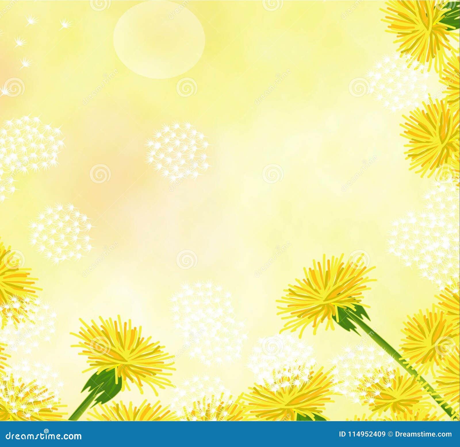 flowers dandelions pale beautiful beautiful background
