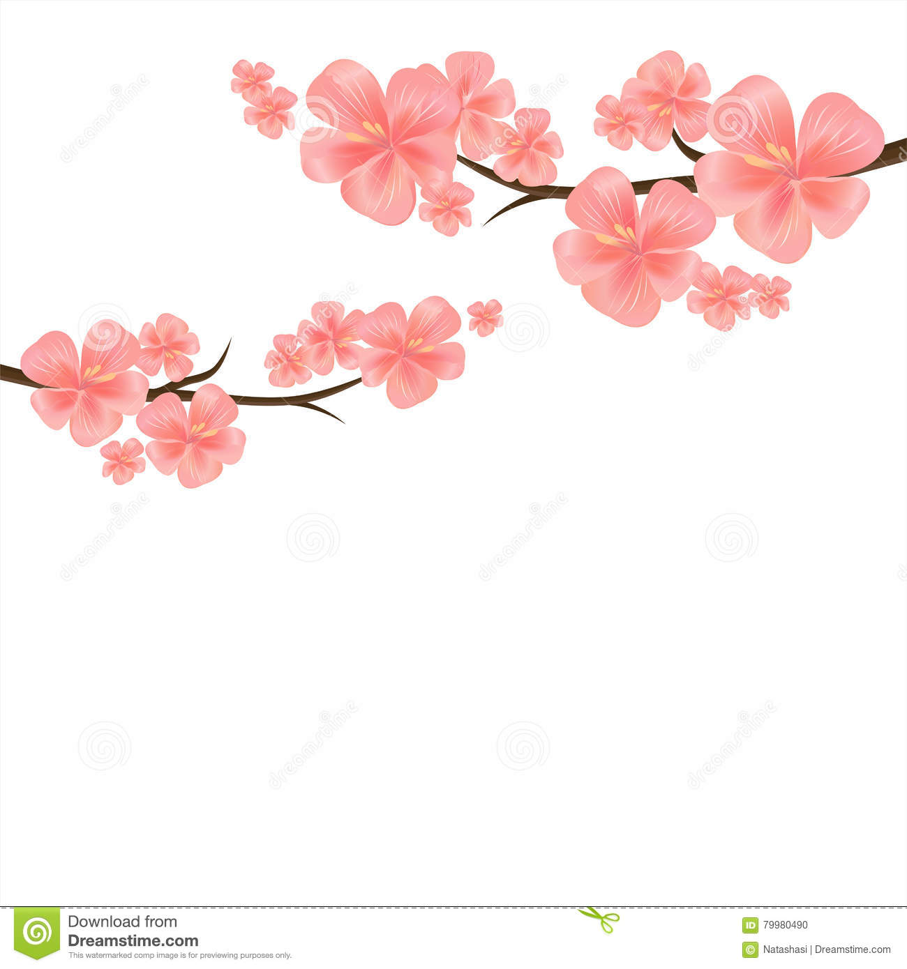 Flowers Design. Branches Of Sakura Isolated On White Background ...