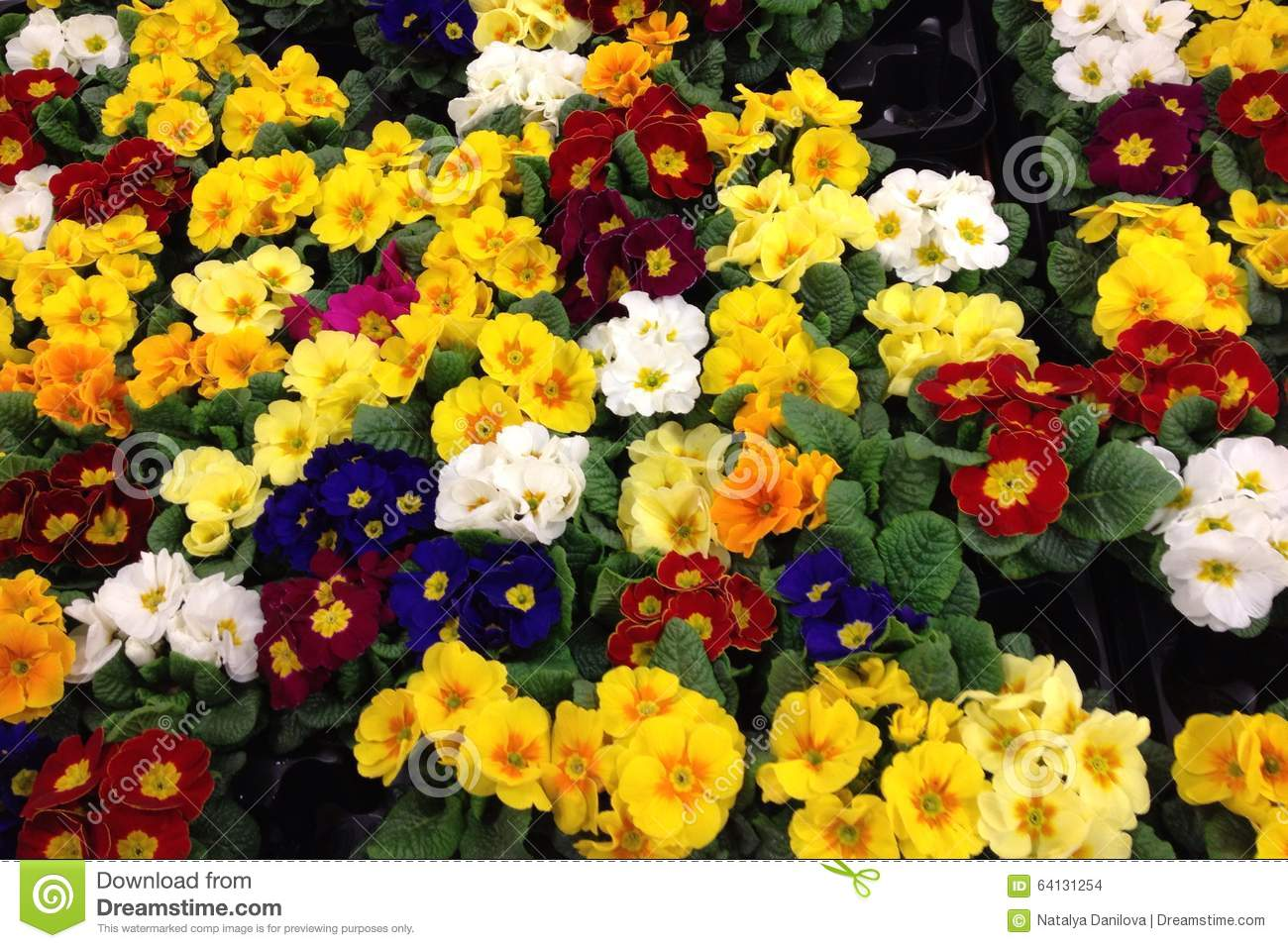 Flowers of different colors stock photo image 64131254 for What makes flowers different colors