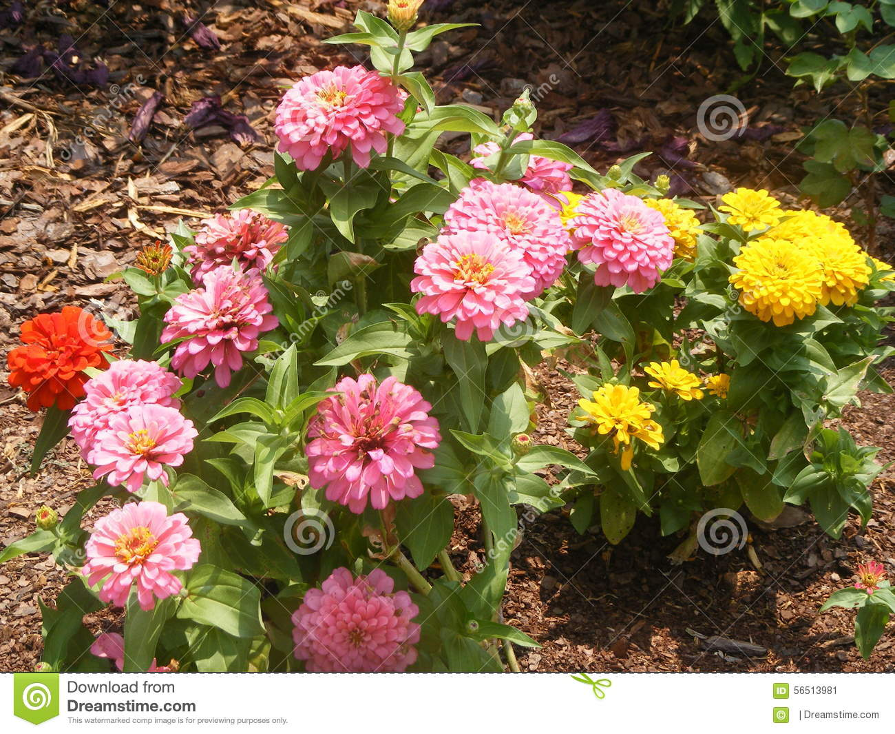 Flowers stock photo image 56513981 for What makes flowers different colors