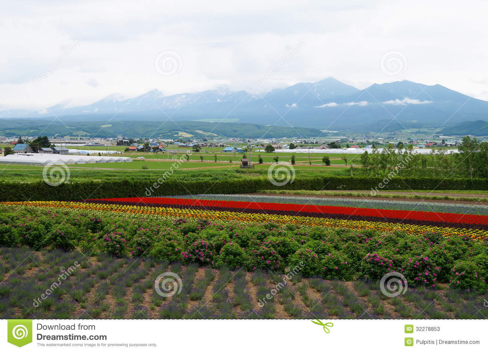 Flowers Farm In Sapporo Japan Stock s Image