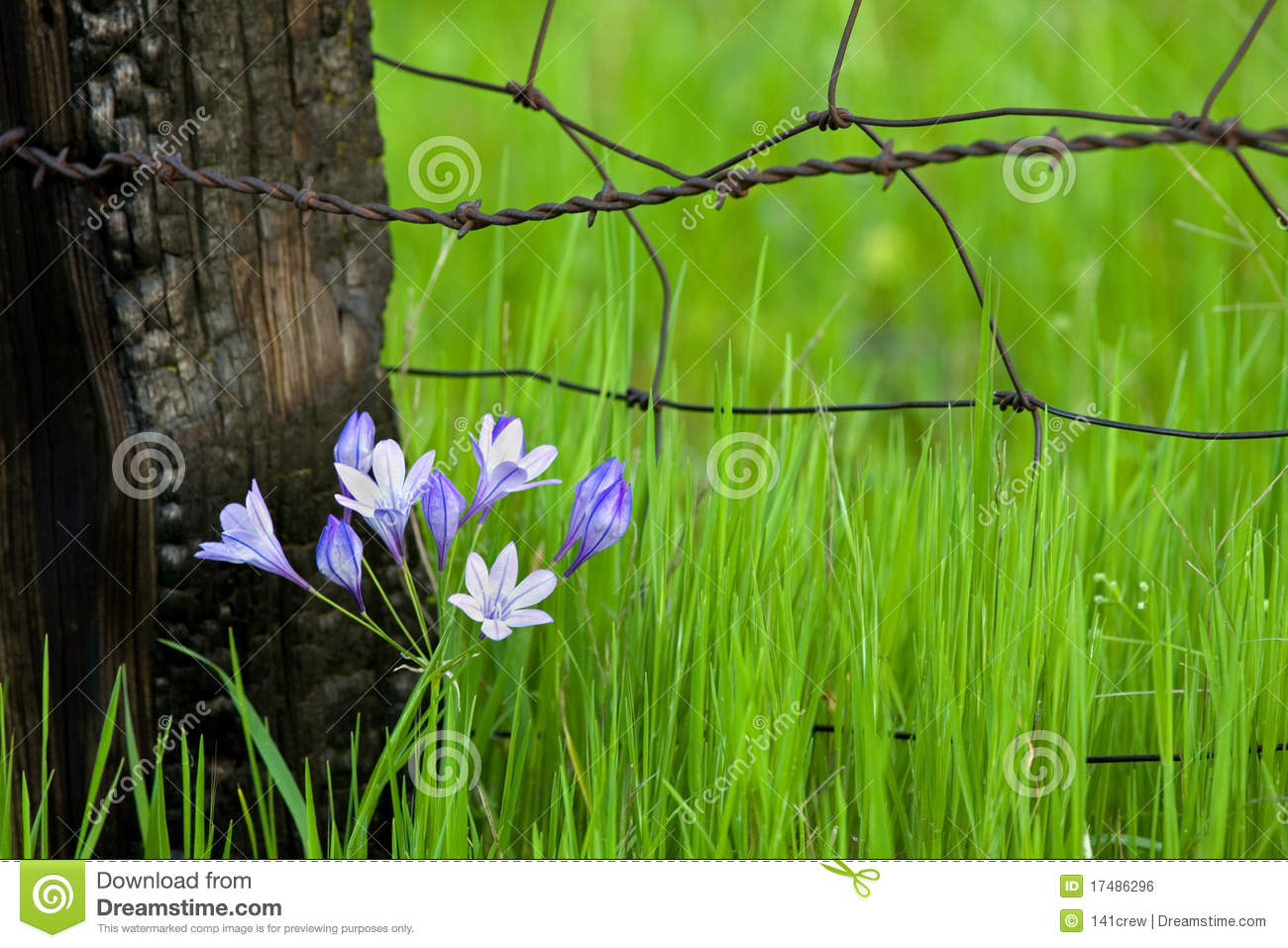 Flowers By Fencepost Stock Photo Image Of Burnt Fence 17486296