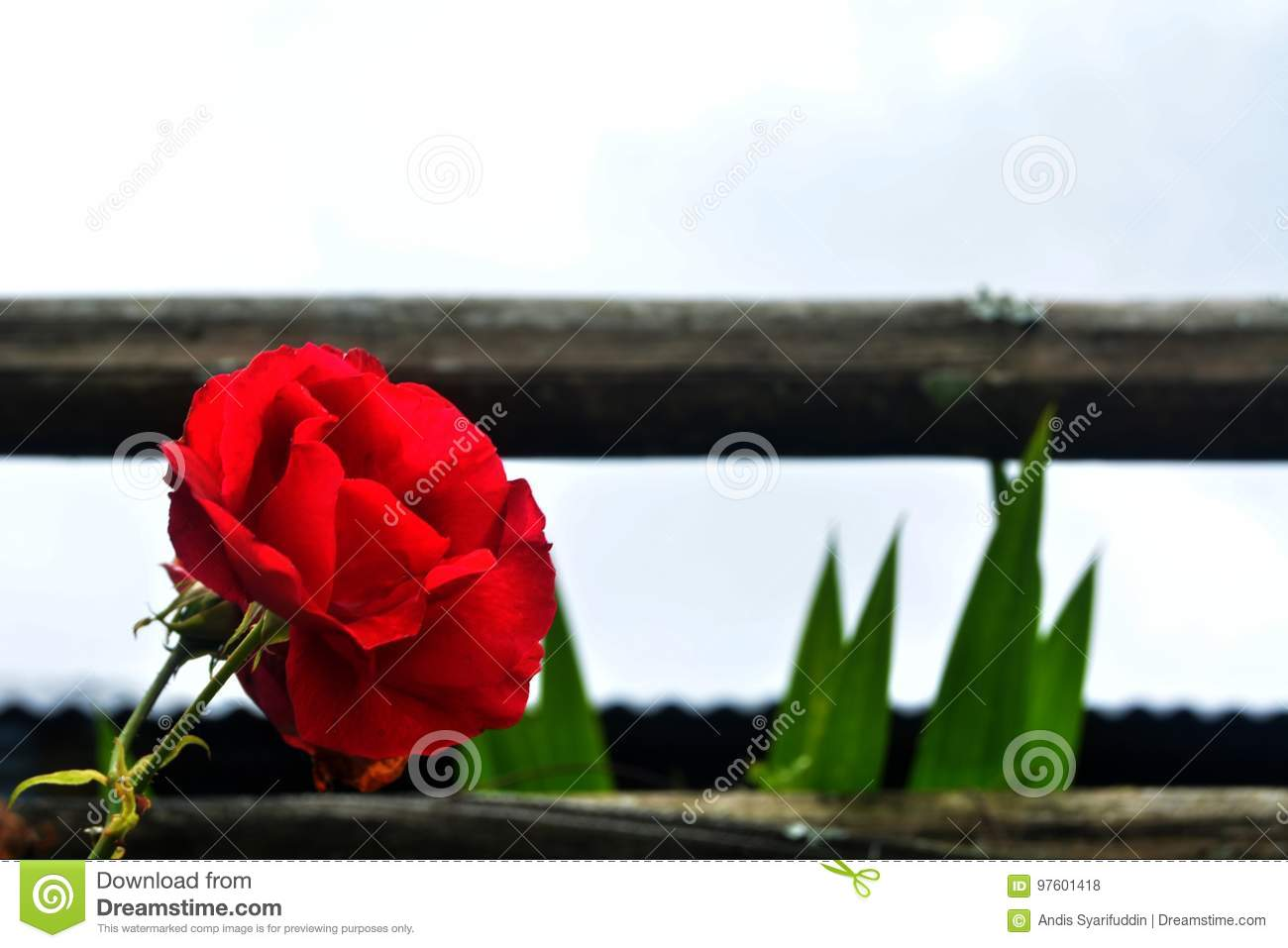 Flowers and fences stock photo image of sharp asia 97601418 flowers and fences izmirmasajfo