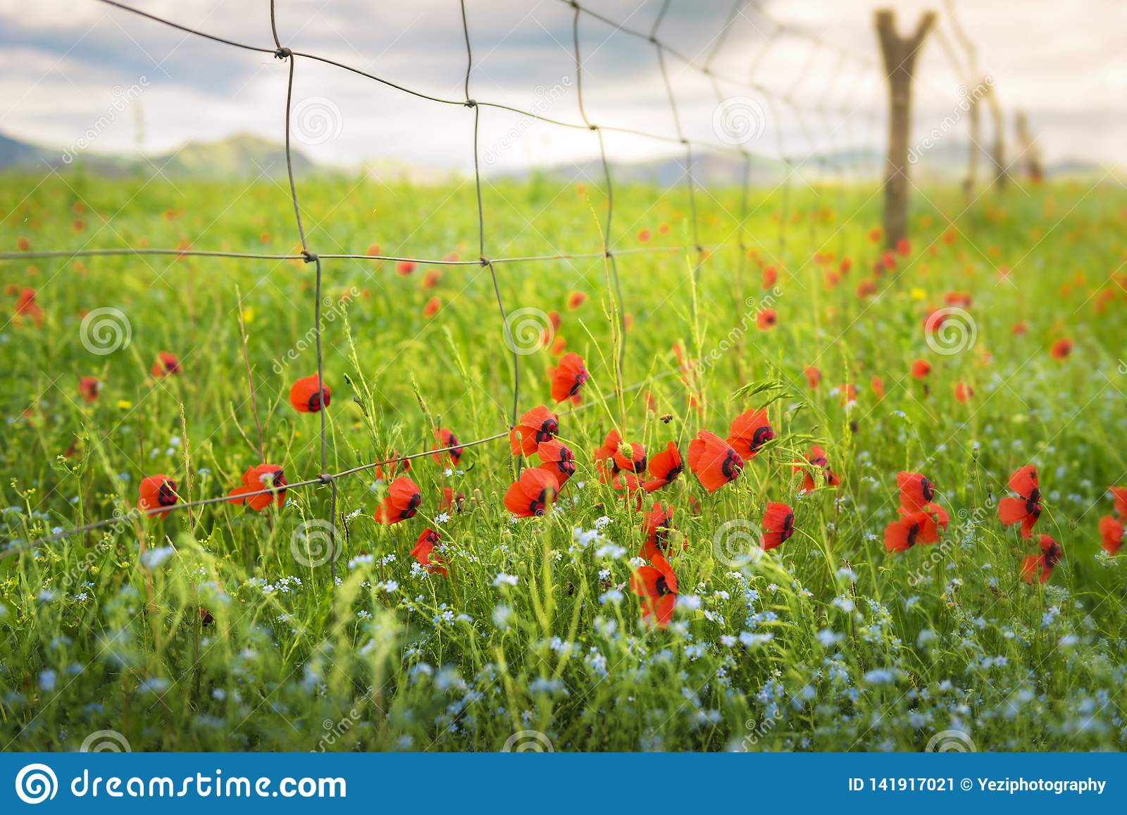 The flowers in the fields