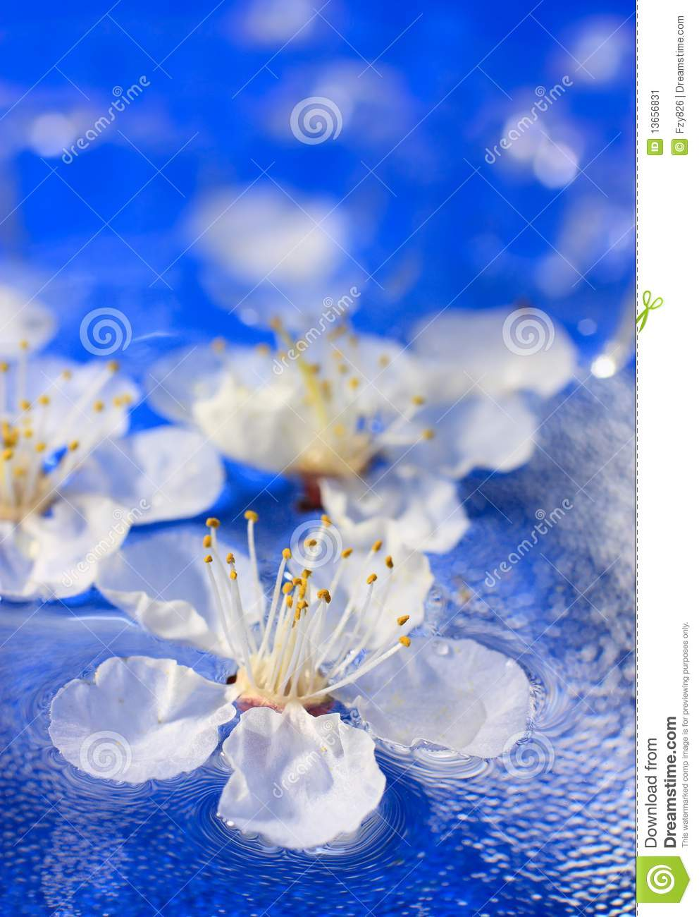 flowers floating in water stock image image 13656831