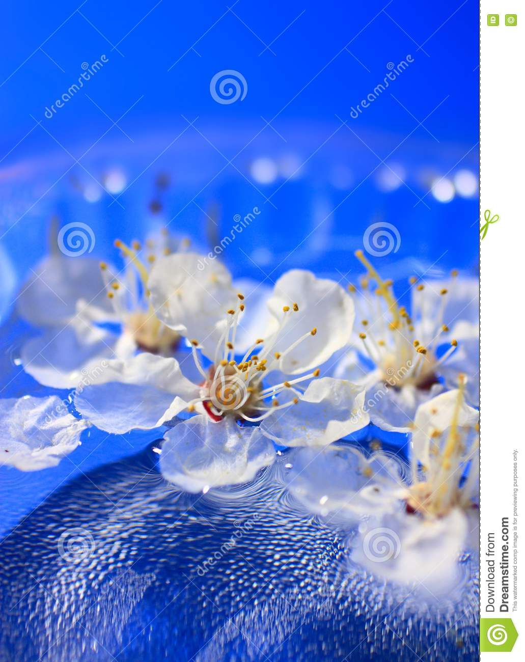 Flowers floating in water stock images image 13656904 for Floating flowers in water