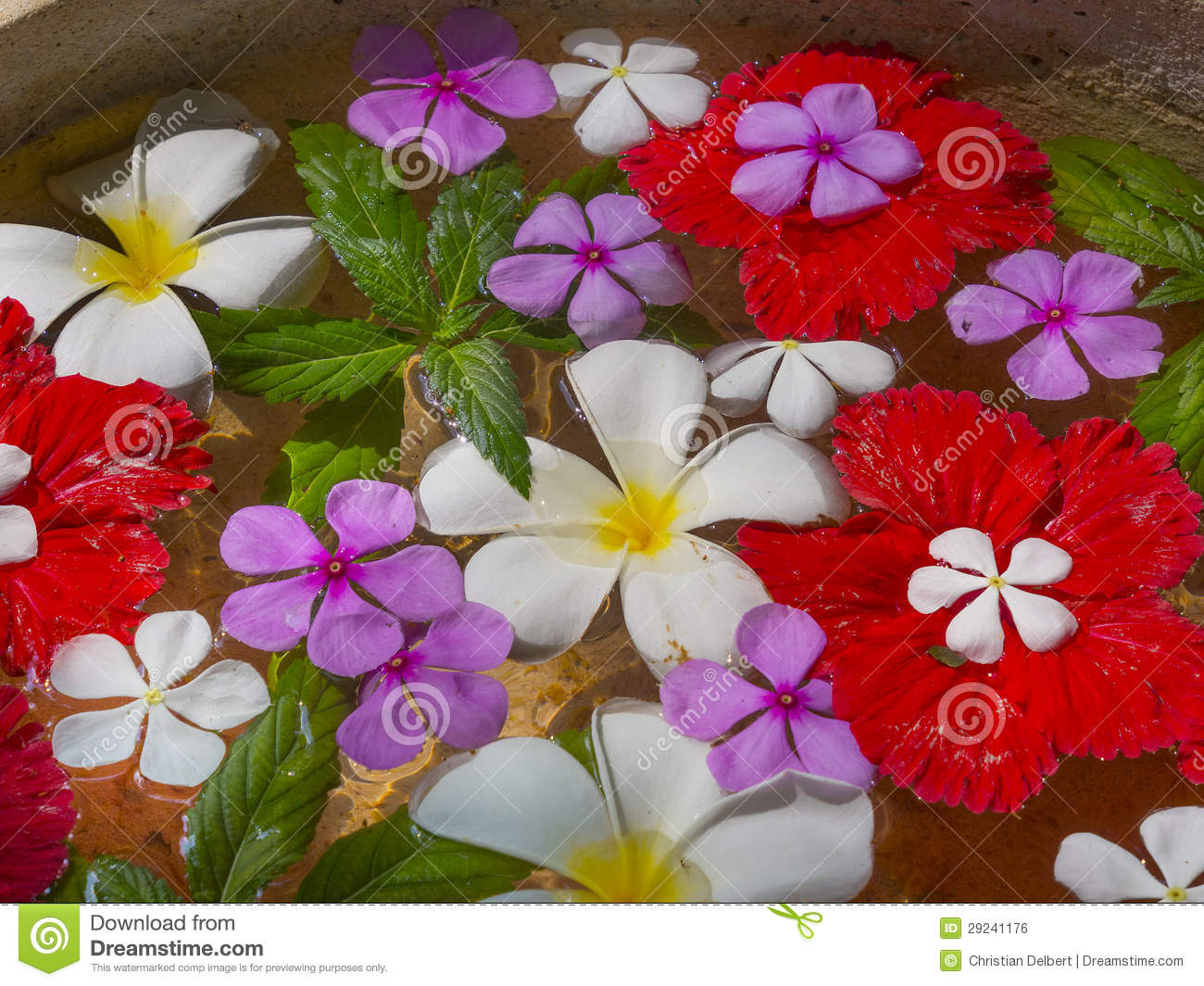 Flowers floating on water royalty free stock image image for Floating flowers in water