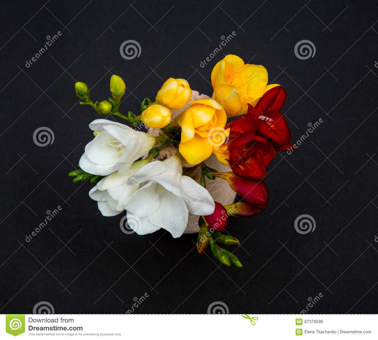 Flowers of freesia white yellow and red in a small vase on a black background
