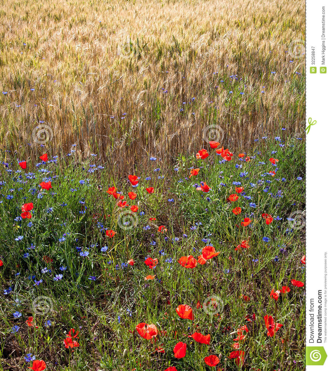 Flowers In French Field Royalty Free Stock graphy Image