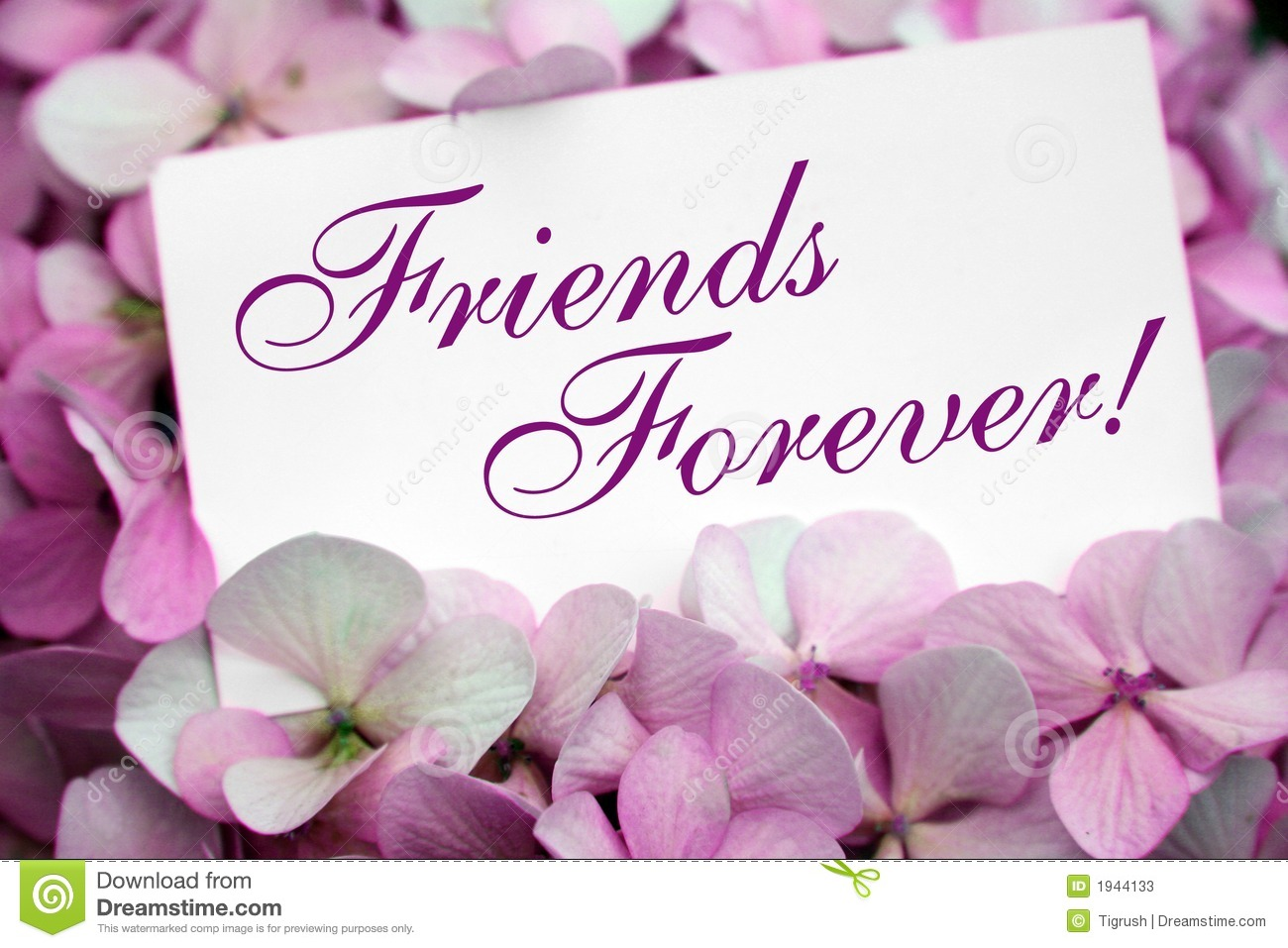 Flowers With Friendship Card Photos Image 1944133 – Friendship Card Template