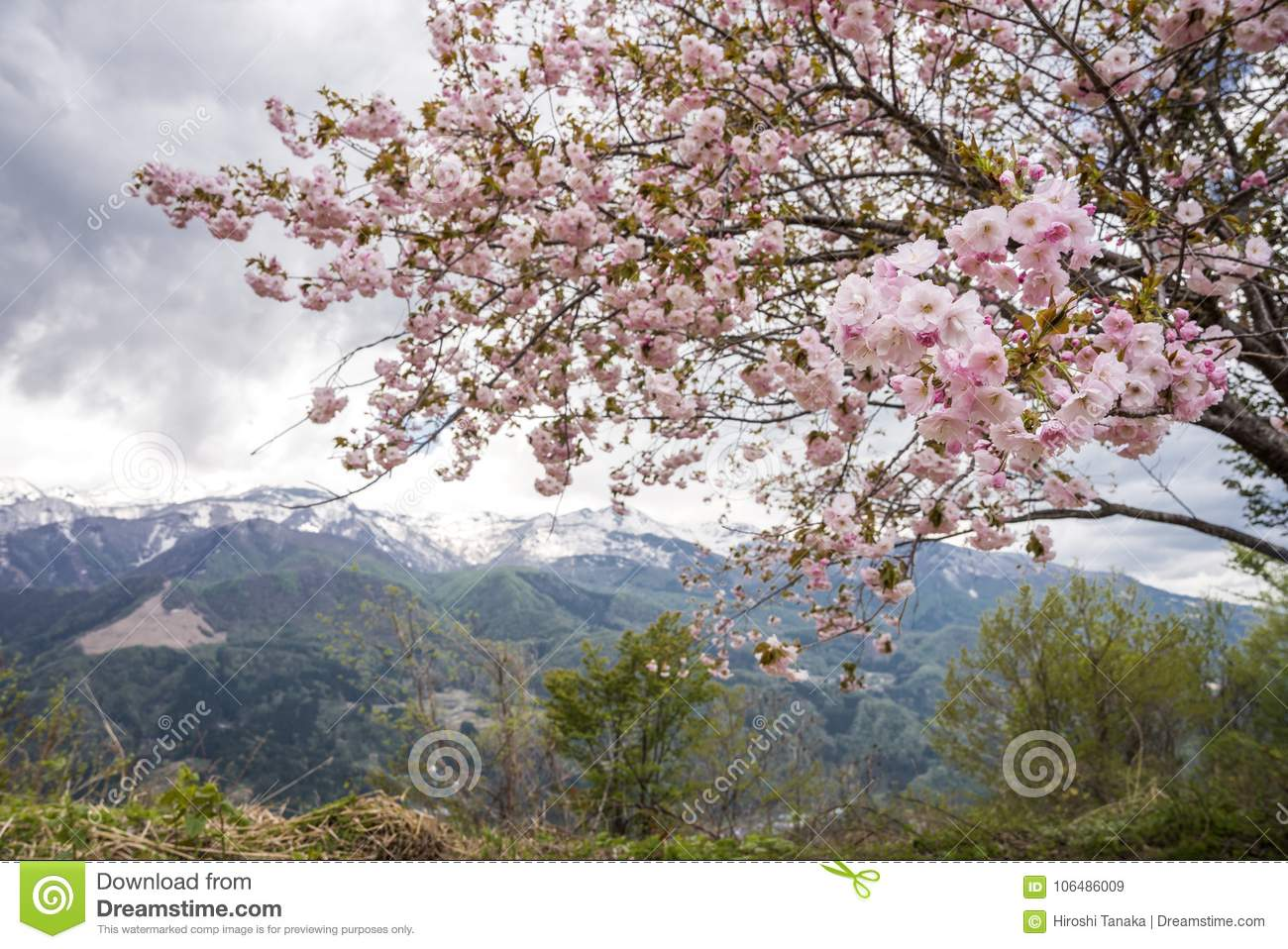 Flowers in front of mountain