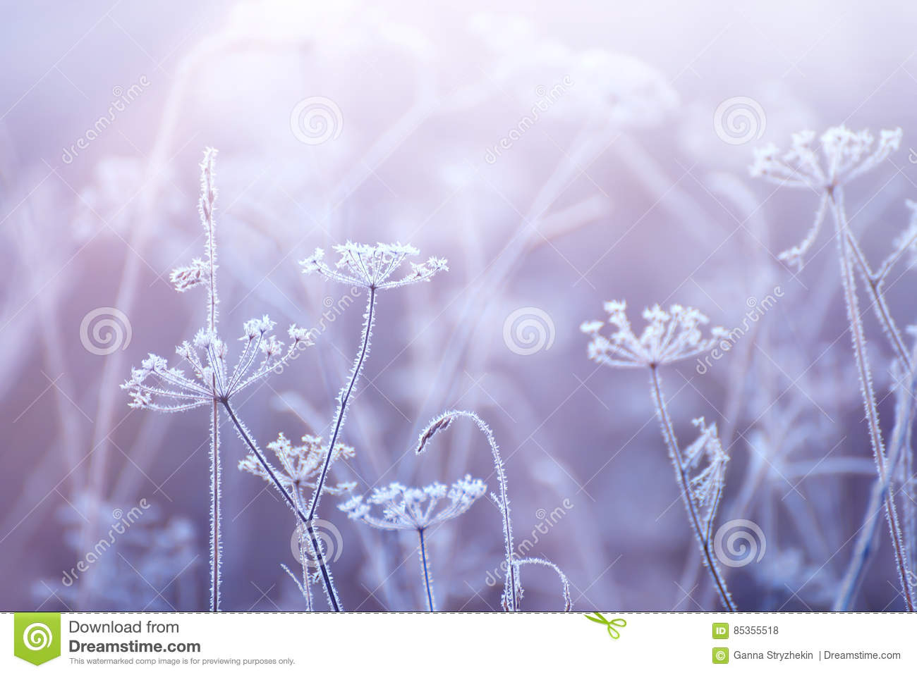 Flowers in the frost with a gentle morning light