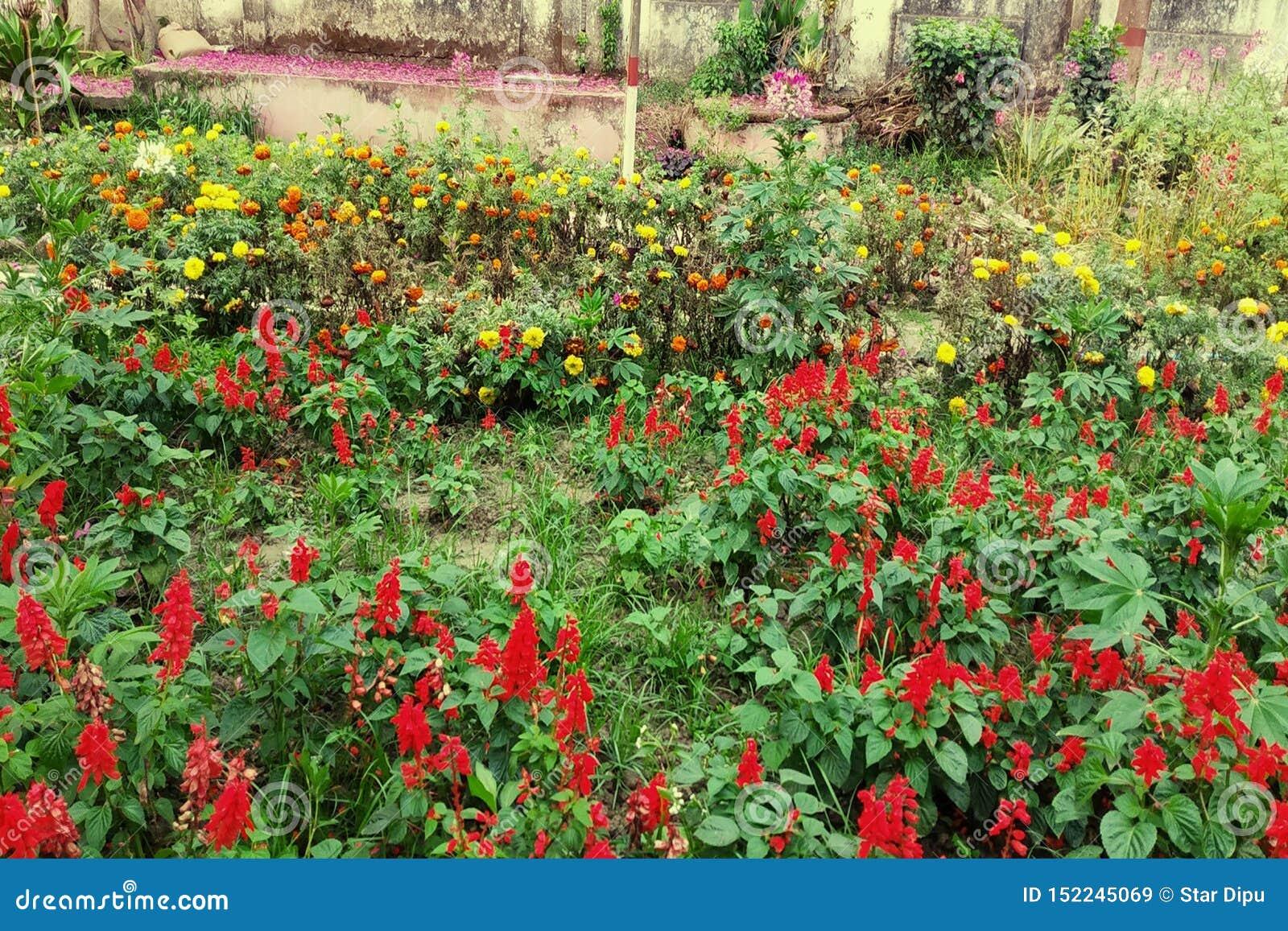 Flowers Garden In The Bangladesh