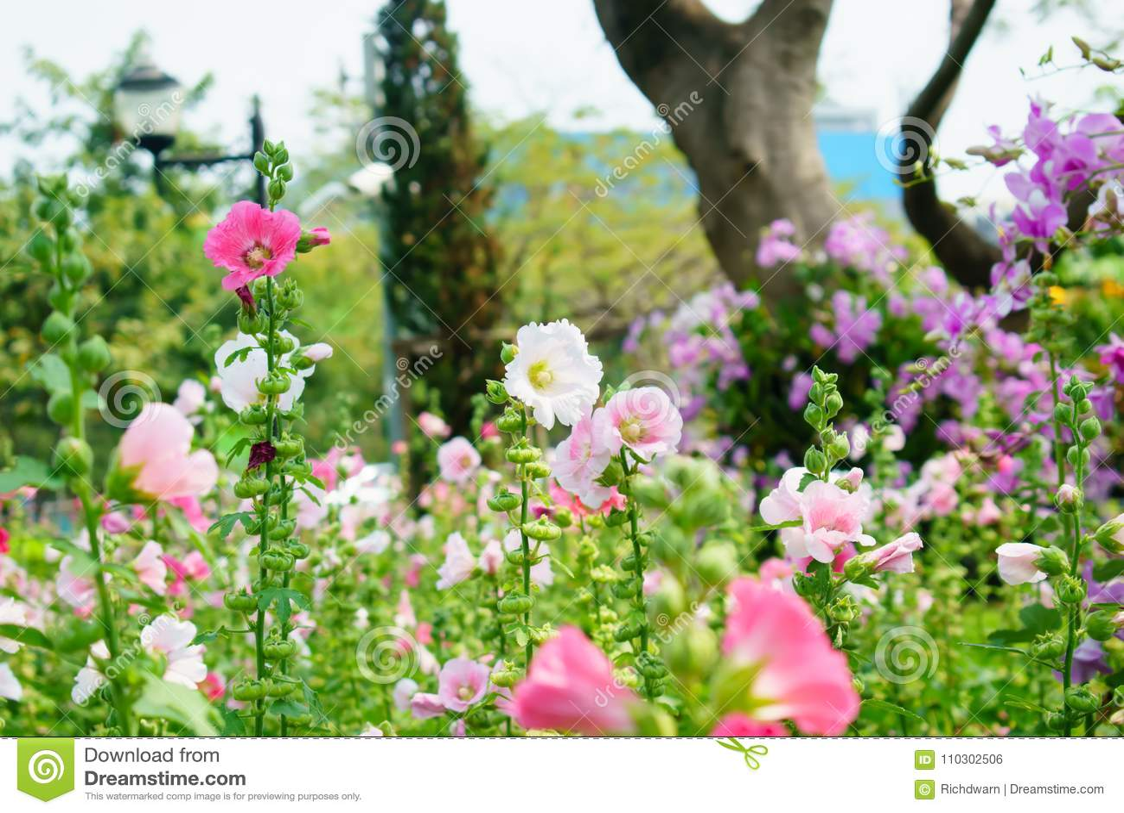Flowers in gardenbeautiful flowers bloom in the gardenqueen si download flowers in gardenbeautiful flowers bloom in the gardenqueen si stock photo izmirmasajfo