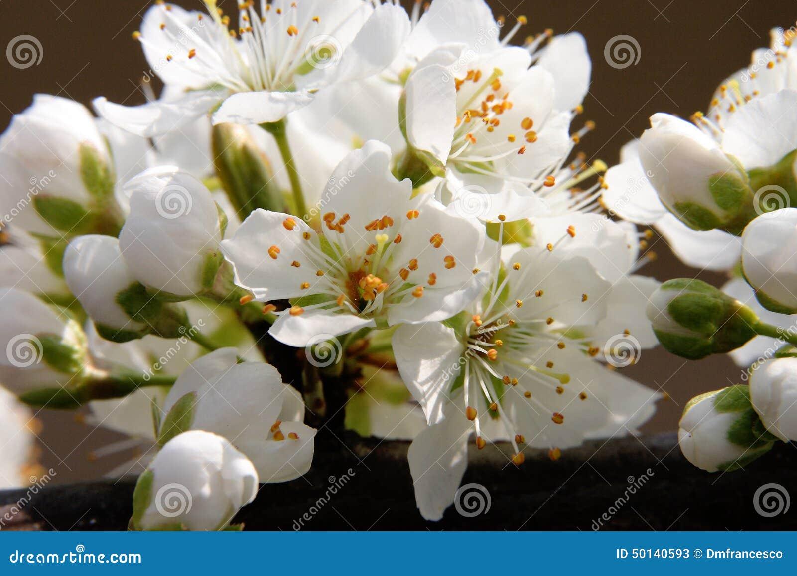 Flowers Garden Stock Image