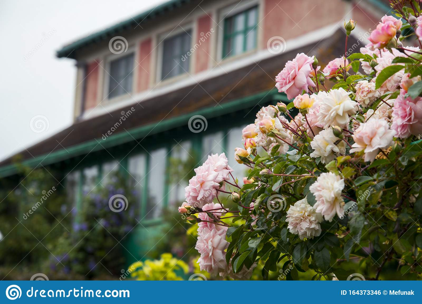 Flowers In The Garden In Giverny Normandy France And Country House Stock Photo Image Of Masterpiece Normandy 164373346