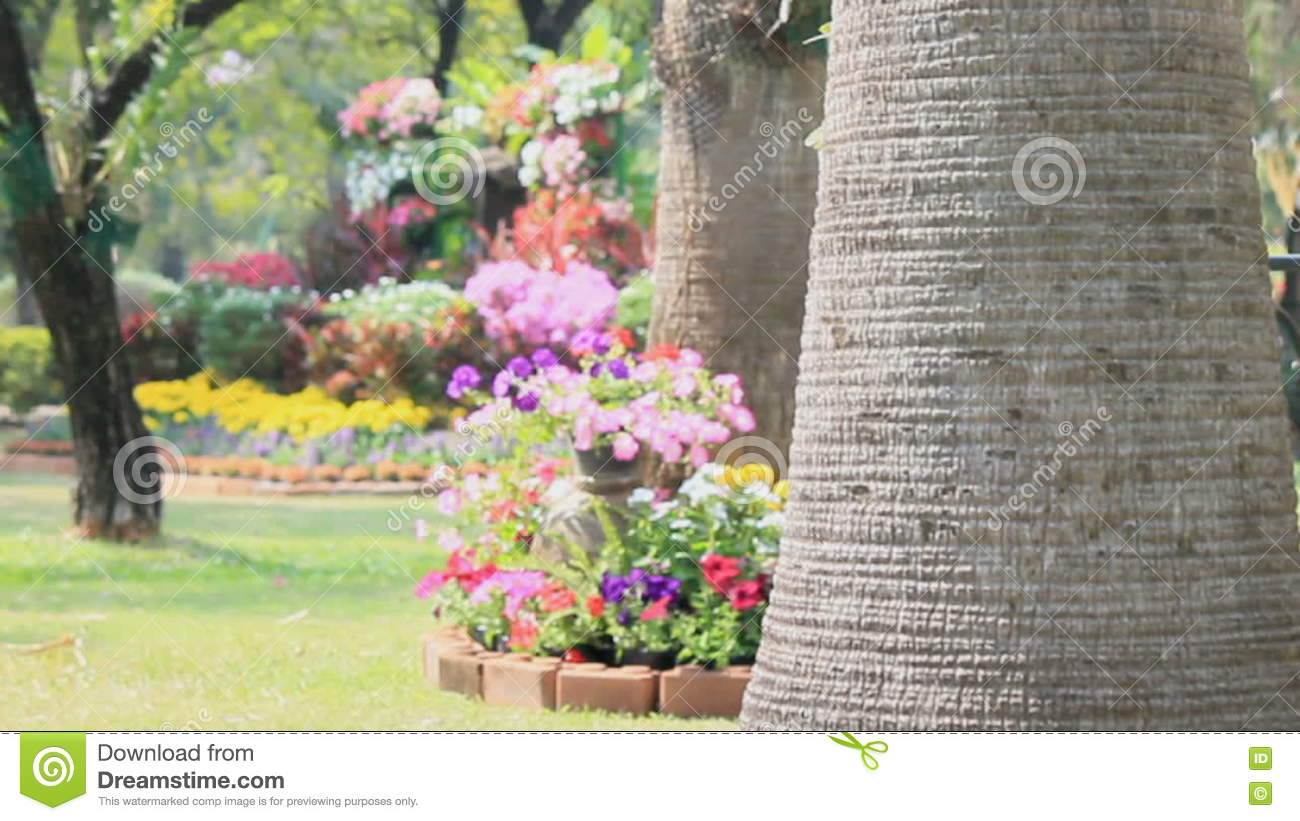 Flowers In The Garden Hd Vdo Stock Footage Video Of Background