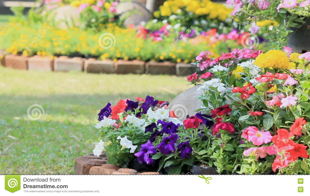 Flowers In The Garden Hd Vdo Stock Video Video Of Color