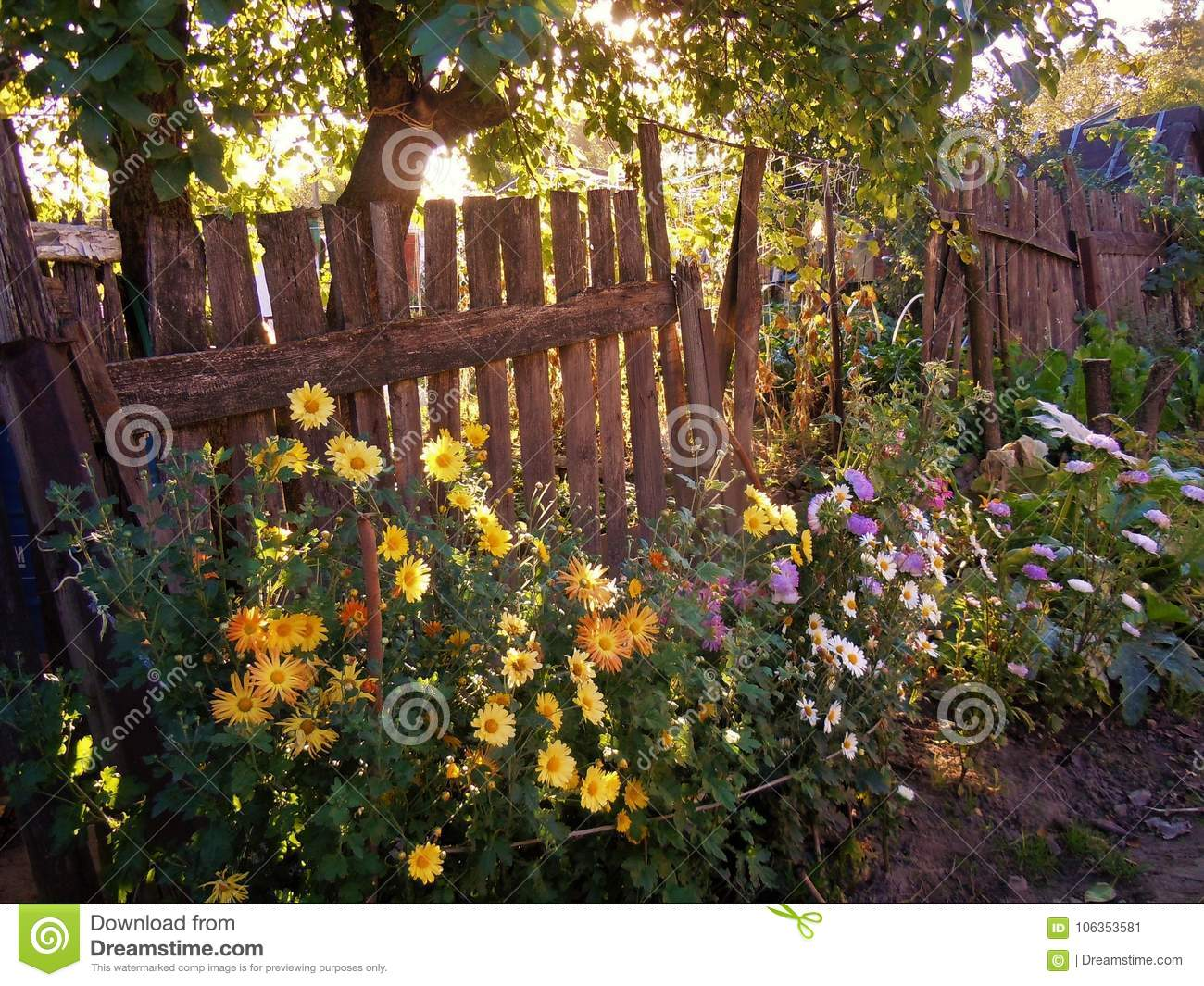 The Flowers Garden In The Morning. Stock Image - Image of bouquet ...