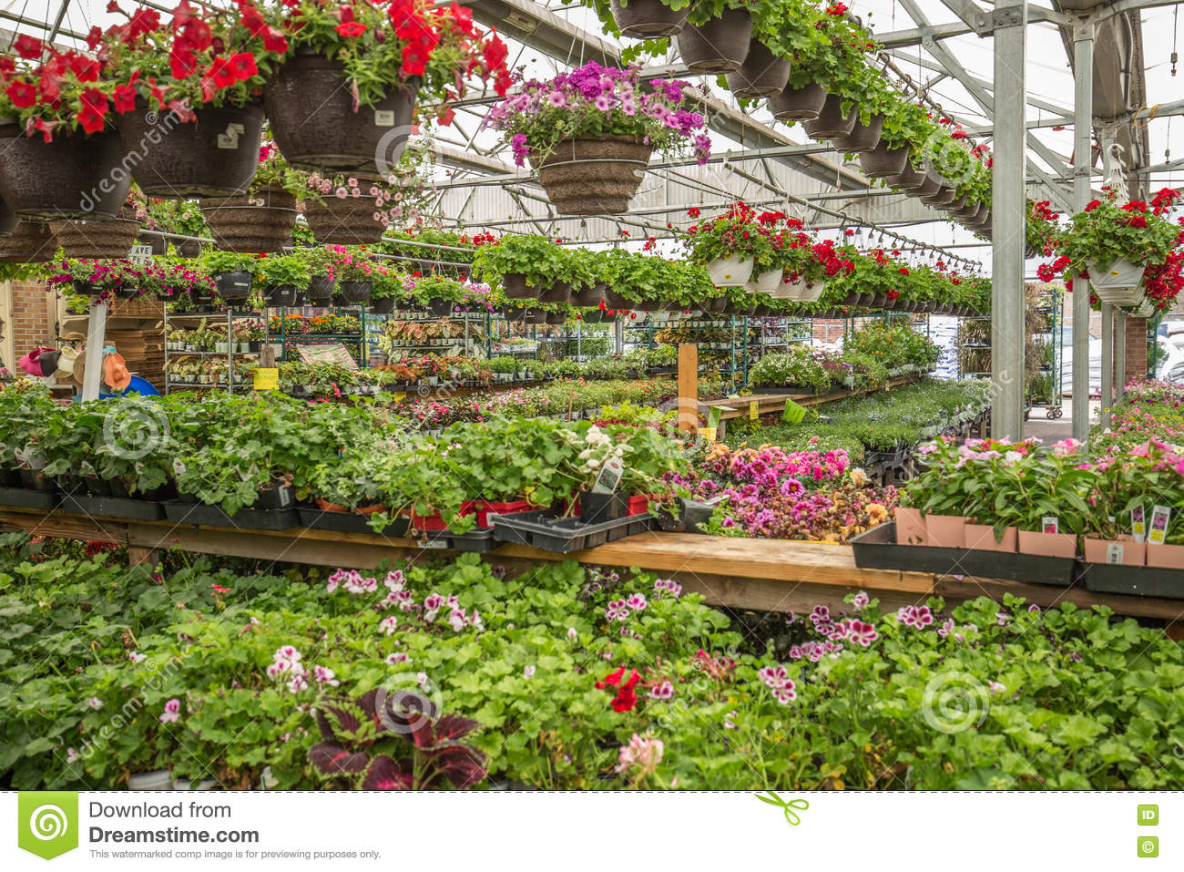 Flowers In A Garden Store Editorial Photo Image 73714856