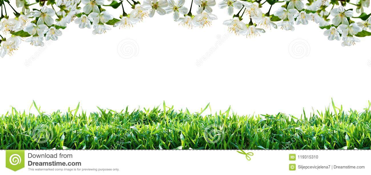 Flowers And Green Grass Spring Border Stock Photo Image Of
