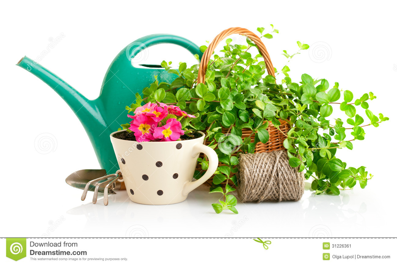 Flowers And Green Plants For Gardening With Garden Tools