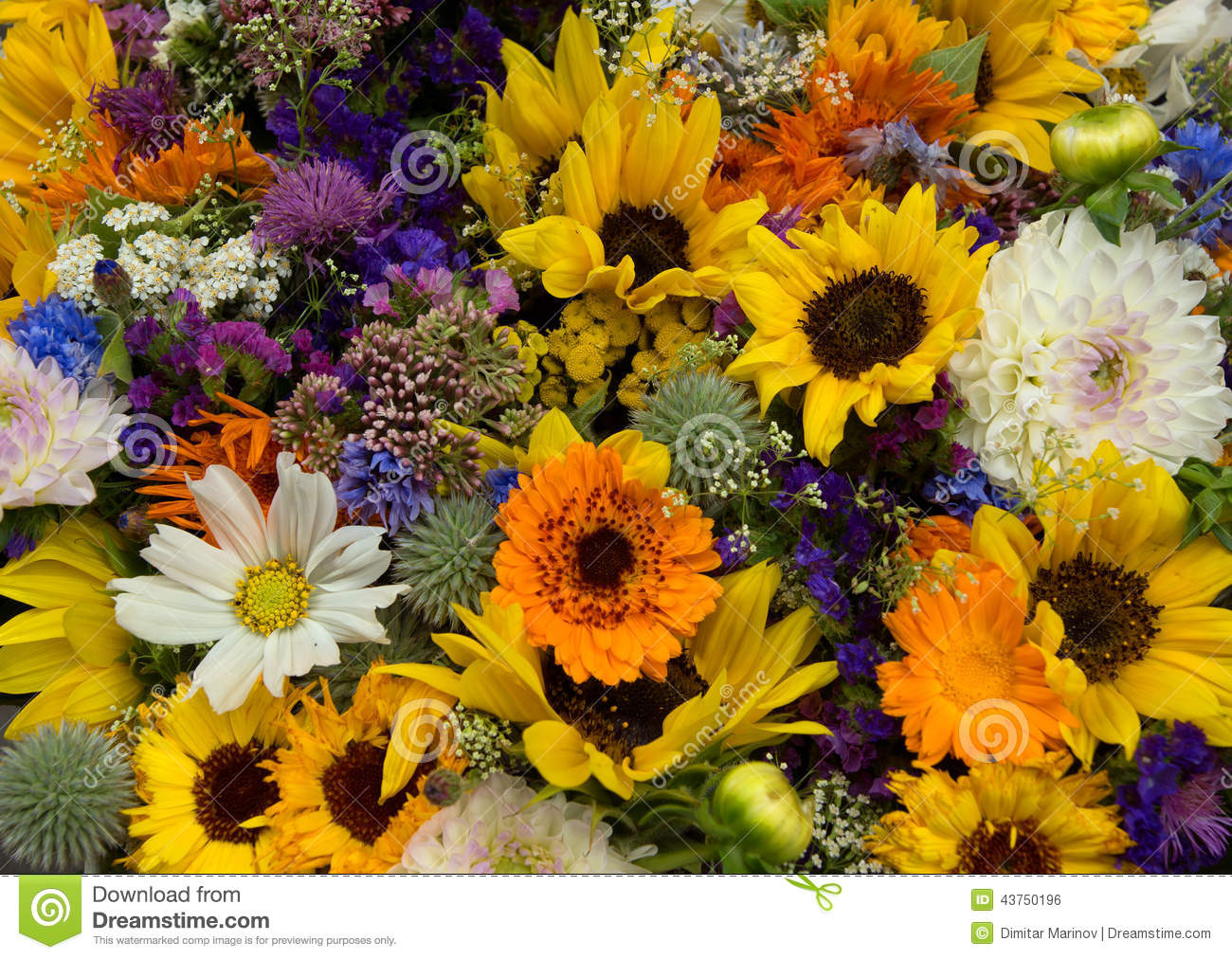 Flowers stock photo image of plant group yellow flower 43750196 download flowers stock photo image of plant group yellow flower 43750196 mightylinksfo