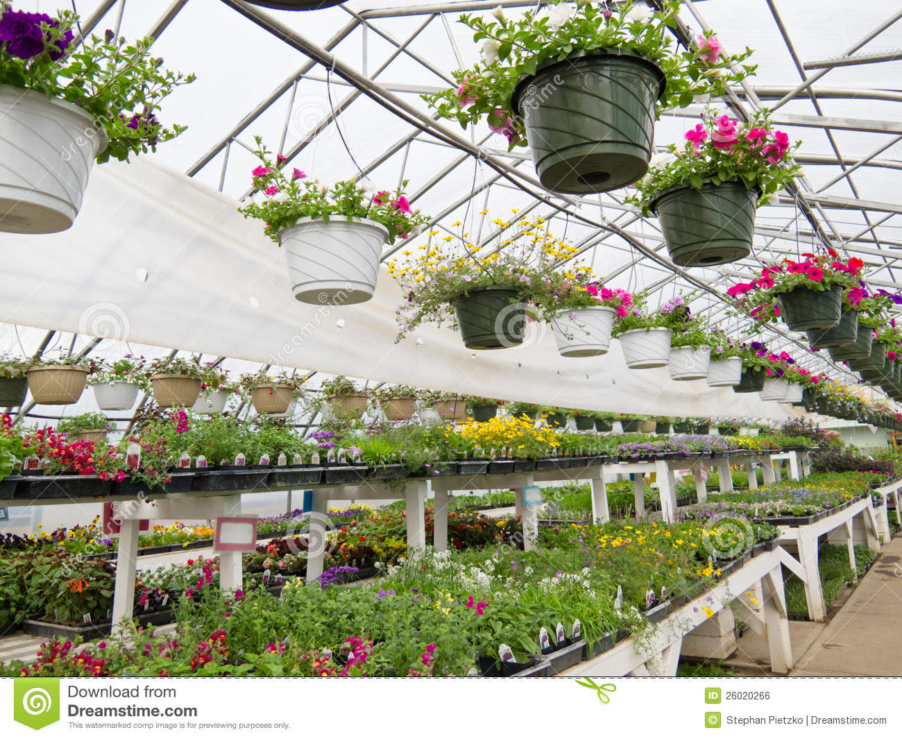 Flowers Growing In Foil Hothouse Of Garden Center Stock ...