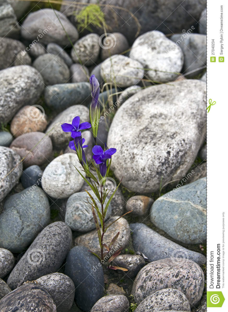 Flowers Growing On The Rocks. Stock Images - Image: 27040234