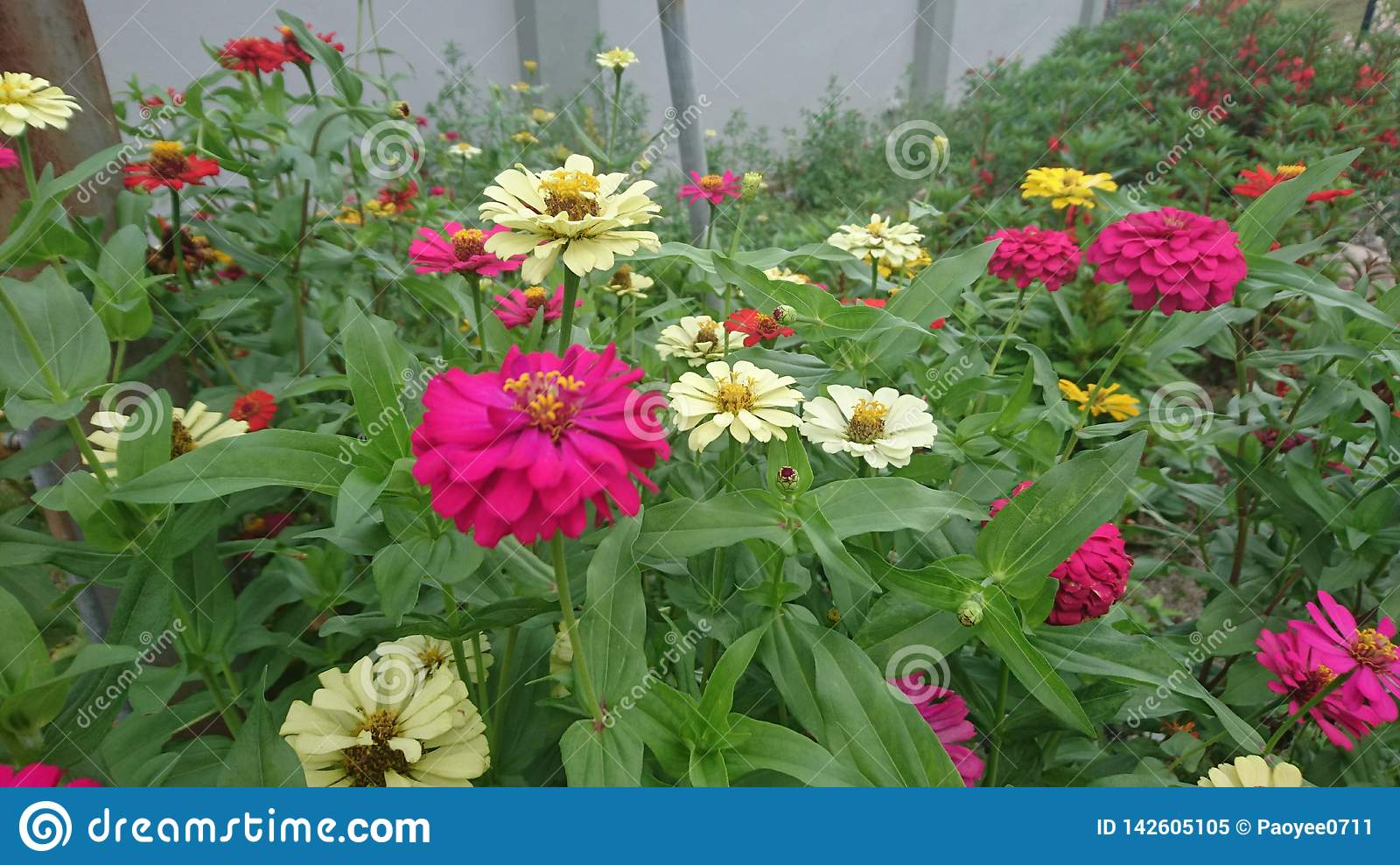 Flowers grows from natural soil