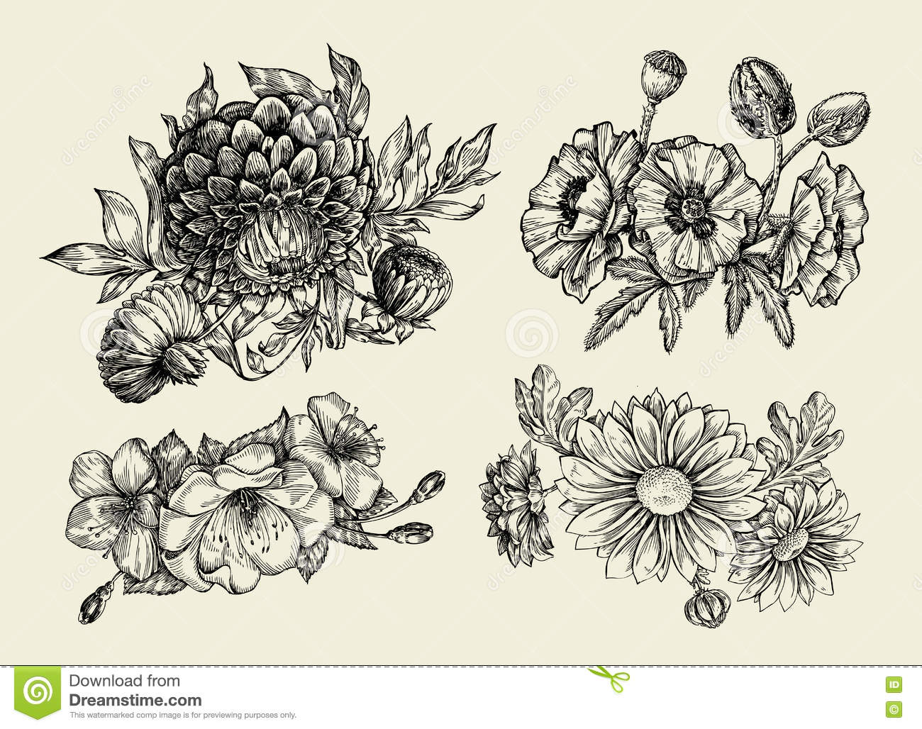 Flowers. Hand Drawn Sketch Flower, Poppy, Chrysanthemum ...
