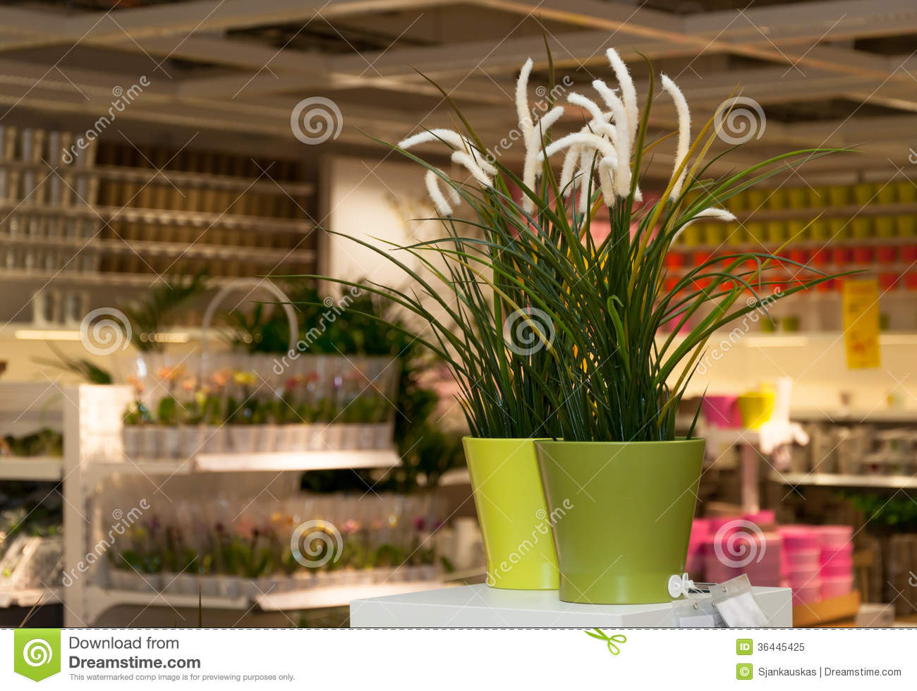 Flowers And Home Decor Shop Royalty Free Stock Photo